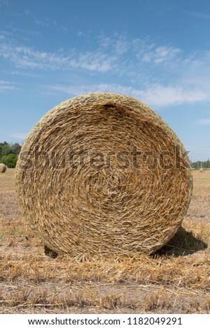 Harvested Hay Field