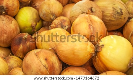 Harvested onions harvested on  bed in  field