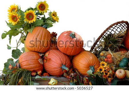 Harvested pumpkins on Halloween