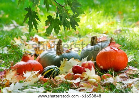 Harvested pumpkins with fall leaves
