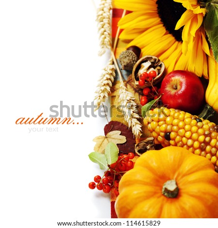 Harvested pumpkins with fall leaves, flowers and fruits over white #114615829