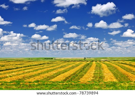 Harvested wheat on farm field in Saskatchewan, Canada