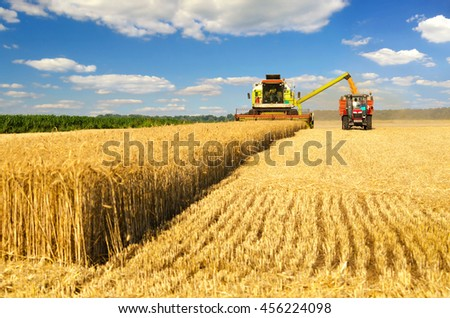 Shutterstock Harvester combine harvesting wheat and pouring it into tractor trailer during wheat harvest on sunny summer day.