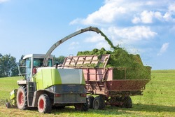 Harvester cutting field, loading Silage into a Tractor Trailer