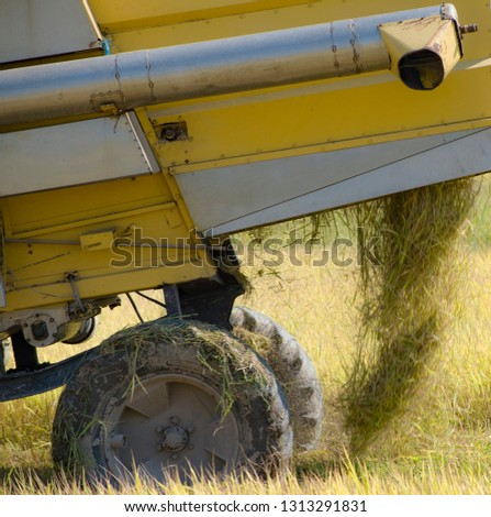 harvester machine harvest rice on the paddy field,