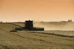 Harvester machine, harvesting in the Argentine countryside, Buenos Aires province.