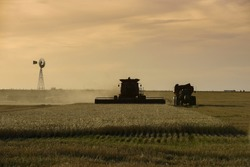 Harvester machine, harvesting in the Argentine countryside, Buenos Aires province, Argentina.