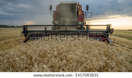 harvester removes wheat field on the background of the sunset cloudy sky #1457083835