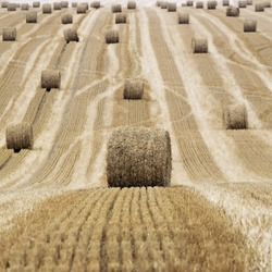Harvestest straw bales on field, Gamaches en Vexin, France