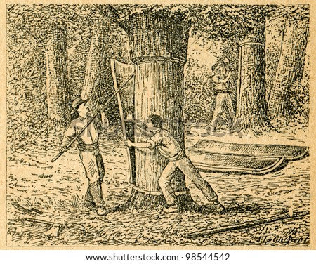 Harvesting cork from cork oaks - old illustration by unknown artist from Botanika Szkolna na Klasy Nizsze, author Jozef Rostafinski, published by W.L. Anczyc, Krakow and Warsaw, 1911