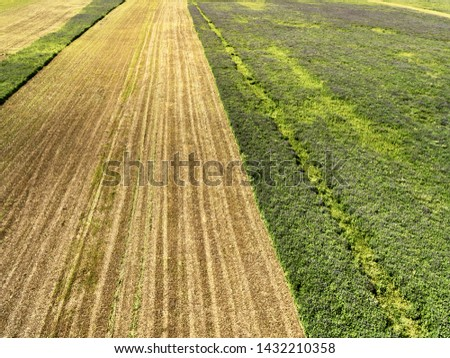 Harvesting crops on a summer sunny day. Partially collected crop areas of forage crops.