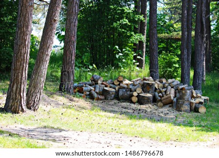 Harvesting firewood for the winter. Sawn tree trunks are prepared for splitting them