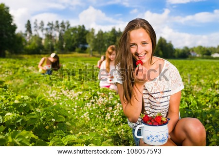 Harvesting girl on the strawberry field. Focus on her and behind group of girls, she look toward camera, horizontal format