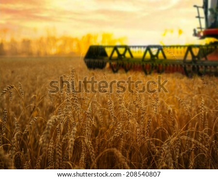 Harvesting machine on ripening ears of yellow wheat field on the sunset cloudy orange sky background of the setting sun on horizon