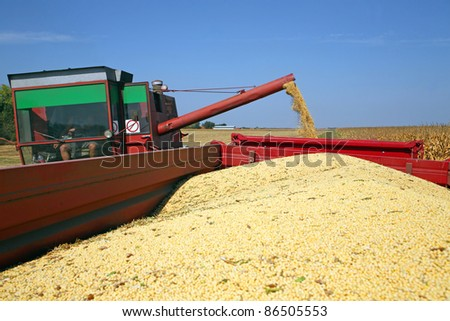Harvesting of soybean at the filed in Europe