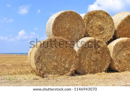 Harvesting of straw in the rural landscape #1146943070