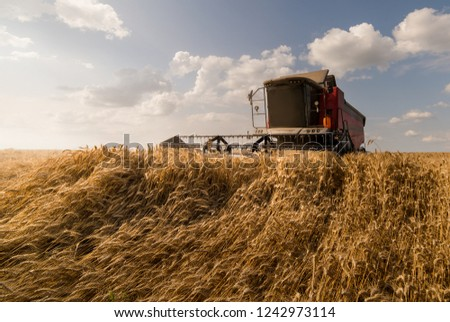 Harvesting of wheat fields with combine #1242973114