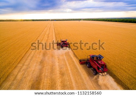 Harvesting of wheat in summer. Two red harvesters working in the field. Combine harvester agricultural machine collecting golden ripe wheat on the field. View from above.