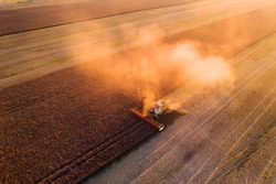 Harvesting oilseed rape in autumn field. Harvester combine in a cloud of dust glowing from the setting sun. Aerial top view