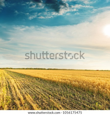 harvesting on golden agriculture field in sunset #1056175475