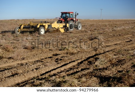 Harvesting potatoes
