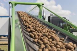 Harvesting potatoes in Lower Saxony, Germany