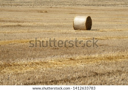 Harvesting wheat. Bale on the field #1412633783