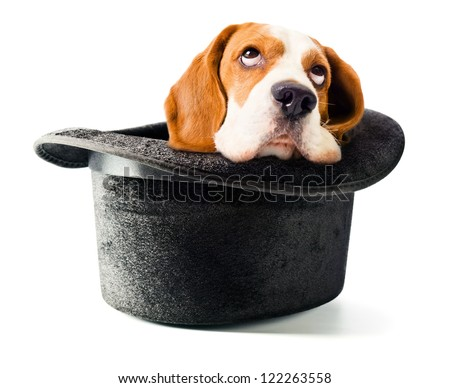 Hat of the wizard with a dog isolated on white background