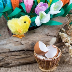 Hatched toy easter chick, hatch egg and spring tulip flowers on wooden background.