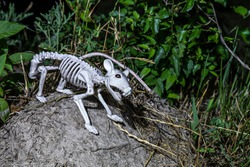 Haunted rat skeleton at night
