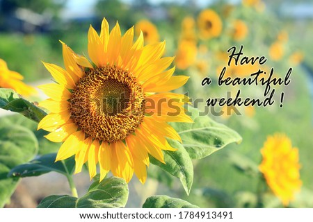 Have a beautiful weekend. Card and greeting weekend concept with beautiful sunflower blossom in the summer or spring season in field. Stockfoto ©