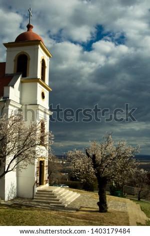 Havihegyi templom a virágzó mandulafával / European Tree of Year Stock fotó ©