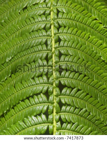 hawaii jungle fern close up