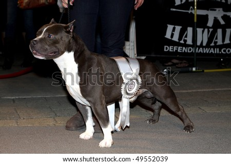 """HAWAII - MARCH 12: """"Diesel"""" from Bully Industry won Best in Show at the Bully's Night Out event at Aloha Tower March 12, 2010 in Honolulu, Hawaii."""