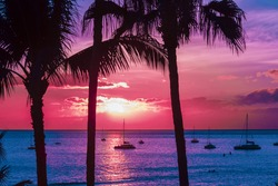 Hawaii Seascape with palm trees and sailing yachts in silhouette.