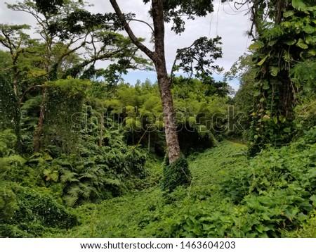 Hawaiian Rain Forest Lush Green #1463604203