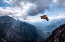Hawk flying over the mountains