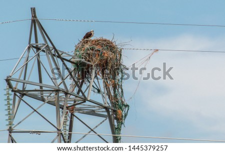 Hawk perched on power line nest #1445379257
