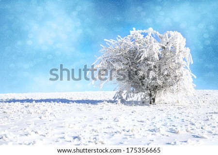 Hawthorn bush showered with snow. Winter landscape after a snowstorm