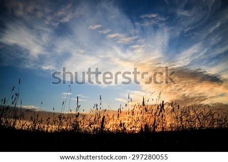 Hay and grass silhouettes and dramatic sunset sky #297280055