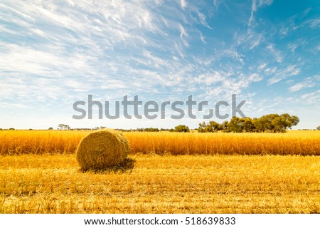 Hay and straw bales in the end of summer. Western Australia. #518639833