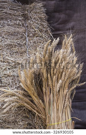hay and wheat #326930105