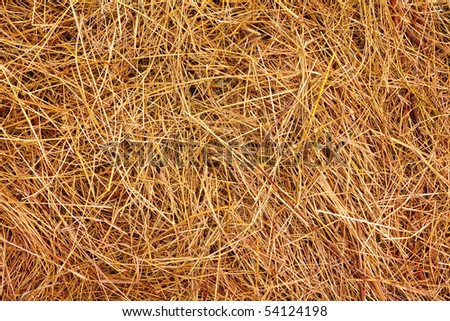 Hay. Background