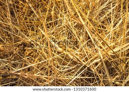 hay background, hay wallpaper, hay background macro #1310371600