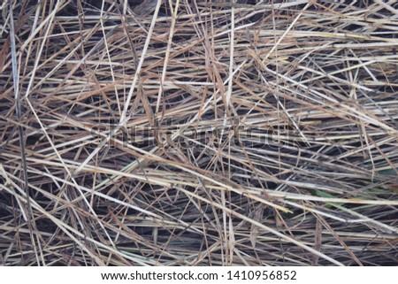 Hay Background, Hay Wallpaper, Hay Background Macro Nature #1410956852