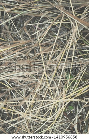 Hay Background, Hay Wallpaper, Hay Background Macro Nature #1410956858