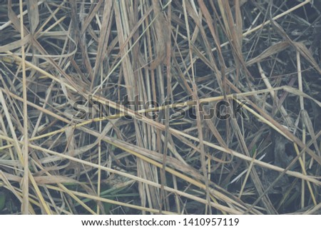 Hay Background, Hay Wallpaper, Hay Background Macro Nature #1410957119