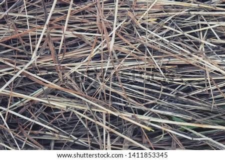 Hay Background, Hay Wallpaper, Hay Background Macro Nature #1411853345