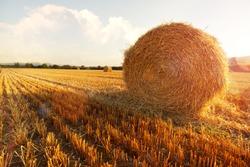 Hay bail harvesting in golden field landscape