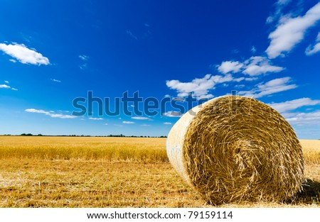 Hay bale in a field under a blue sky